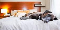 pet friendly hotels 2019 2020 travelzoo