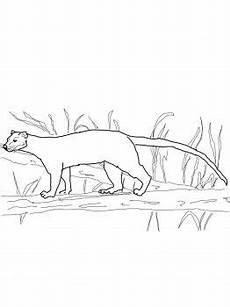 madagascar animals coloring pages 17085 fossa fossa from madagascar coloring page coloring coloring pages world