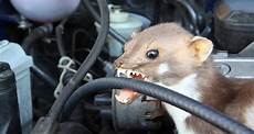 marder im motorraum der albtraum der autobesitzer