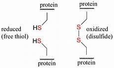 16 12 redox reactions involving thiols and disulfides chemistry libretexts