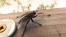 fliegenplage im haus fliegenplage im haus