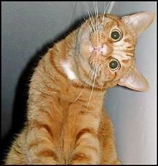 Foto Kucing Lucu Lucu Gambar Gambar Aneh