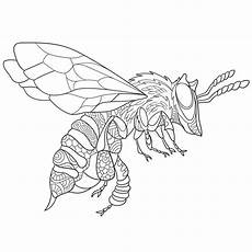 zentangle stylized bee insect stock vector illustration