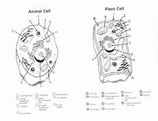 Plant And Animal Cell Diagrams 101 Diagrams