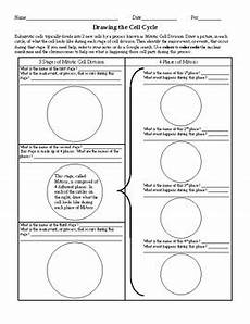 drawing the cell cycle worksheet by ian keith teachers