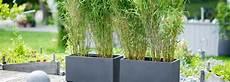 Bambou Pour Balcon Et Terrasse Botanic 174 Bambou Fargesia