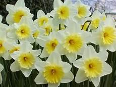 sfondi fiore giardino dei sogni ad ogni segno zodiacale il proprio