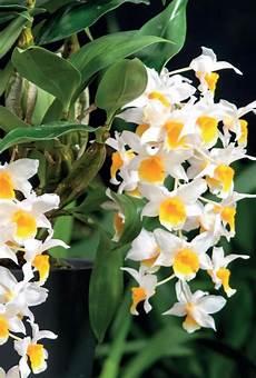 wie oft orchideen gießen s 252 dtirol orchidee