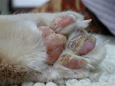 16 April 2014 The Kitten Kaboodle