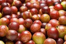 camu camu benefits and uses