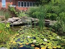 Plantes Aquatiques Incontournables Pour Le Bassin