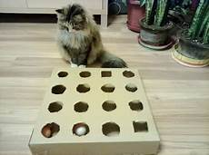 Diy Peek And Play Box For Cat Best Cat