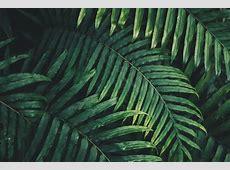 Download wallpaper 6000x4000 leaf, plant, green, carved