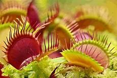 sonderschau zu fleischfressenden pflanzen im botanischen