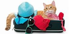 famille d accueil pour chien pendant les vacances faire garder chien ou chat pendant les vacances 60 millions de consommateurs