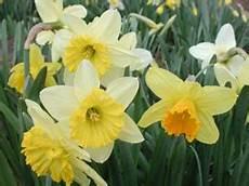 makramee blumenel selbst machen blumen zum selberschneiden fr 252 hjahrsblumen sommerblumen
