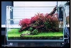 ada aquascape ada cube garden 60p with plants using solar rgb