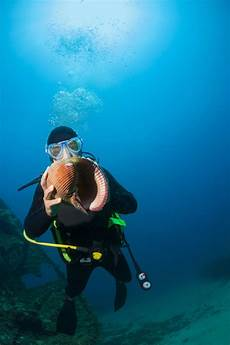 fascinating facts about scuba diving you probably didn t know thrillspire