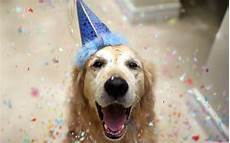 Happy Birthday Animal Images Hd Wallpapers