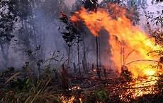 Kebakaran Landa Hutan Taman Nasional Baluran Situbondo