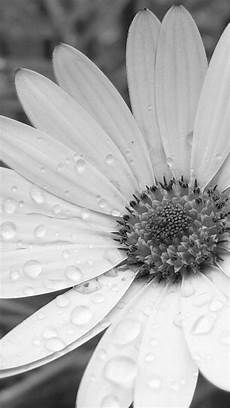 flower wallpaper grey black flower the iphone 5 wallpaper i just pinned