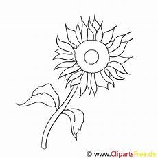 sonnenblume malvorlage kostenlos