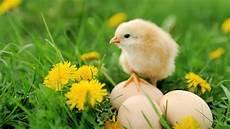 was war zuerst da das huhn oder das ei das ei kam vor dem huhn mdr de