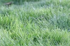 Rasenpflege Nach Dem Winter - rasenpflege im fr 252 hjahr rasen tipps nach dem winter