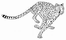 ausmalbilder tiere zum ausdrucken seite 2 4