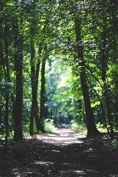 Nature Path 4k Wallpaper by Wallpaper Forest 5k 4k Wallpaper 8k Trees Sunlight