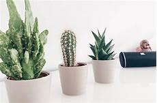 Der Kleine Grüne Kaktus - kakteen oder kaktusse hauptsache sukkulenten kulinses