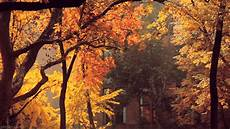 Fall Backgrounds Gif