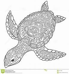 zentangle stylized turtle stock vector illustration of