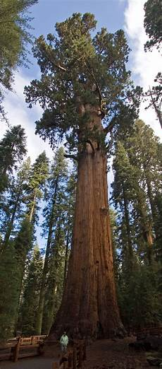 eqoi7a list of largest sequoias