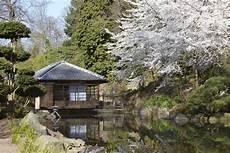 japan garten stuttgart bonsai gemeinschaft zur kirschbl 252 te in den japanischen