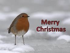 wildlife centre keeper s blog merry christmas