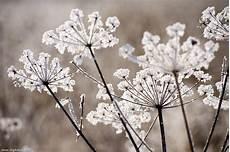frozen plants winter macro photography image bank