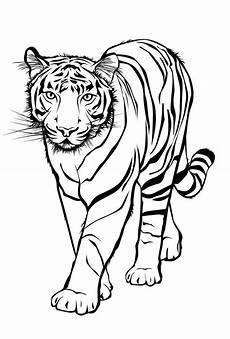 Ausmalbilder Tiere Tiger Ausmalbilder Tiere Tigers Tiger рисунки животные трафареты