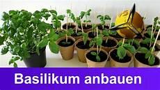 basilikum selber anbauen ernten und lagern