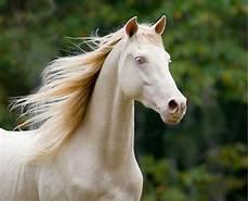 Schöne Pferde Bilder - mehr als 70 sch 246 ne pferde bilder animals horses