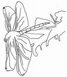 malvorlagen insekten ausmalbilder