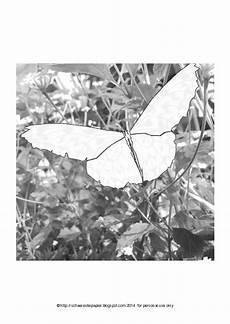 Malvorlagen Schmetterling Jung Ausmalbilder Kostenlos Schmetterling