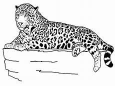 Ausmalbilder Leopard Ausdrucken Ausmalbilder Leopard Kostenlos