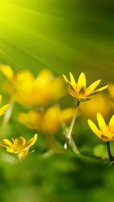 grass flower wallpaper iphone wallpaper flowers 5k 4k wallpaper 8k sunray yellow