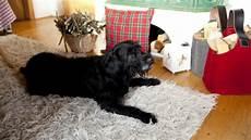 tappeto per cani cuscini per cani grandi comfort per la cuccia