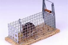 maus in der wohnung fangen m 228 use im haus bek 228 mpfen katzen 7