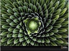 Free Desktop Wallpaper: Plant Desktop Wallpapers Gallery