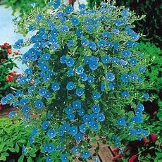 G 228 Rtner P 246 Tschkes Blaue Mauritius H 228 Ngepflanzen Blumen