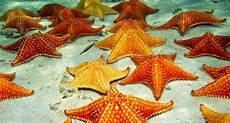 Gambar Bintang Laut Bergerak Hd Koleksi Gambar Hd