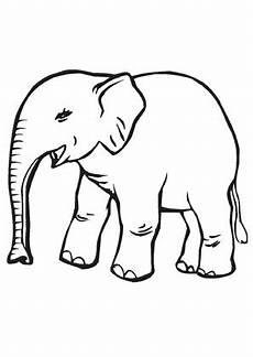 ausmalbild kleiner baby elefant zum ausmalen